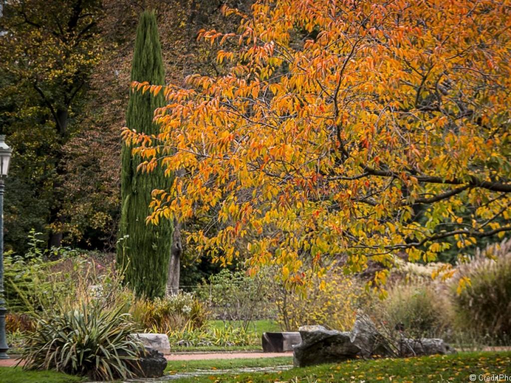 Le Parc de la Tête d'Or s'habille de ses couleurs d'automne