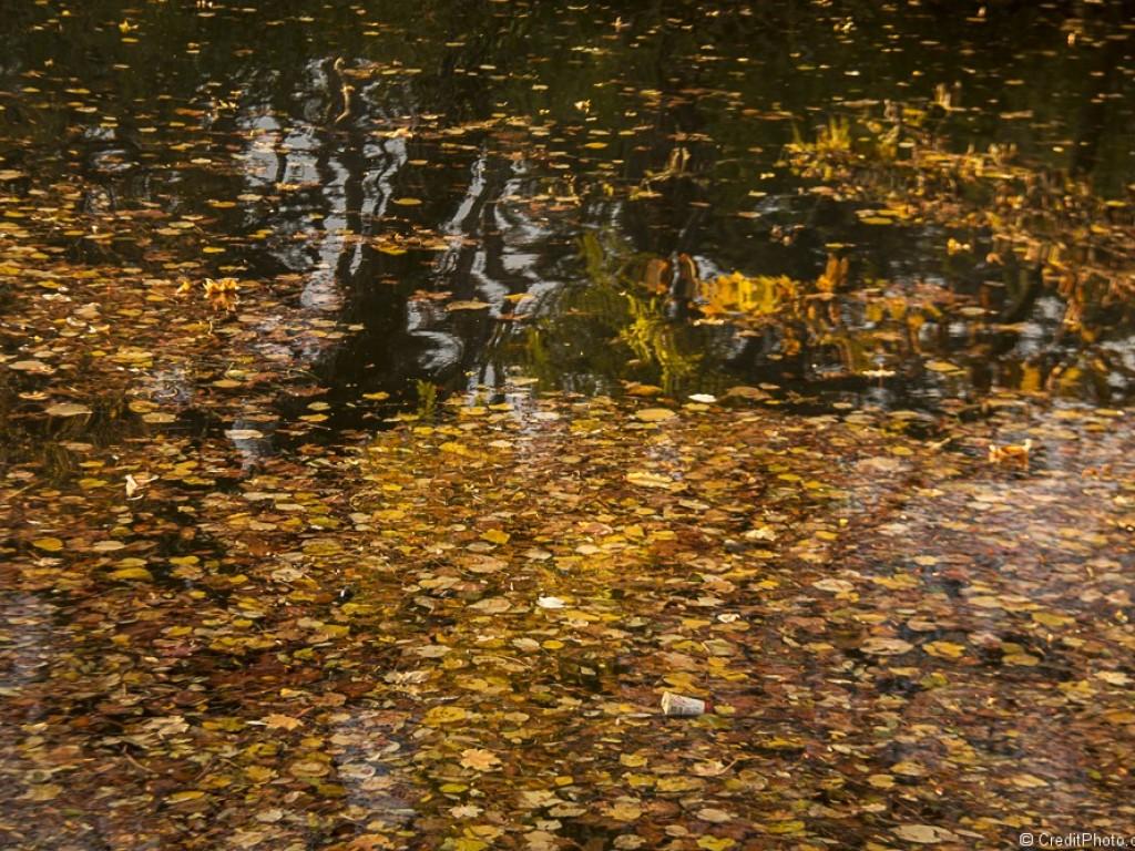 Feuilles d'Automne tombées dans le lac Tête d'Or