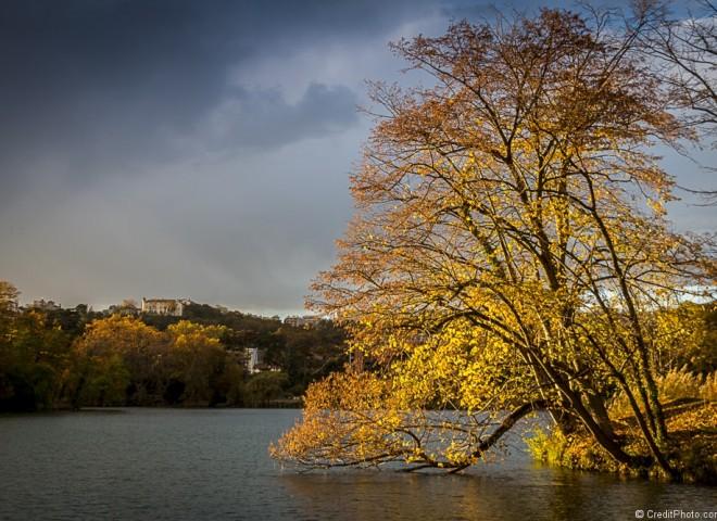Arbre qui plonge dans le lac Tête d'or