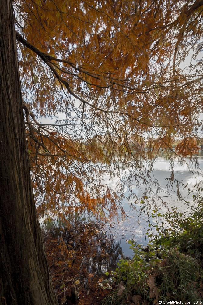 Couleurs d'Automne sur le Parc Tête d'Or de Lyon